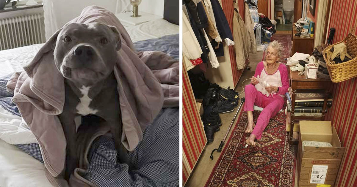 Mujer le tenía miedo al pitbull vecino hasta que le salvó la vida
