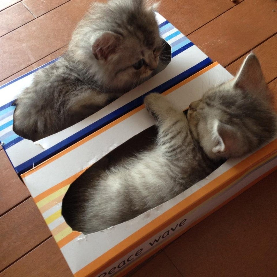 Par de gatitos en caja