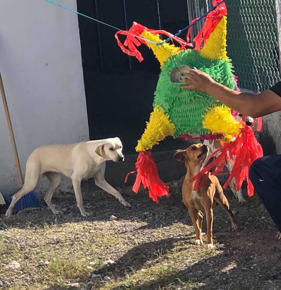 Perrito mira la piñata