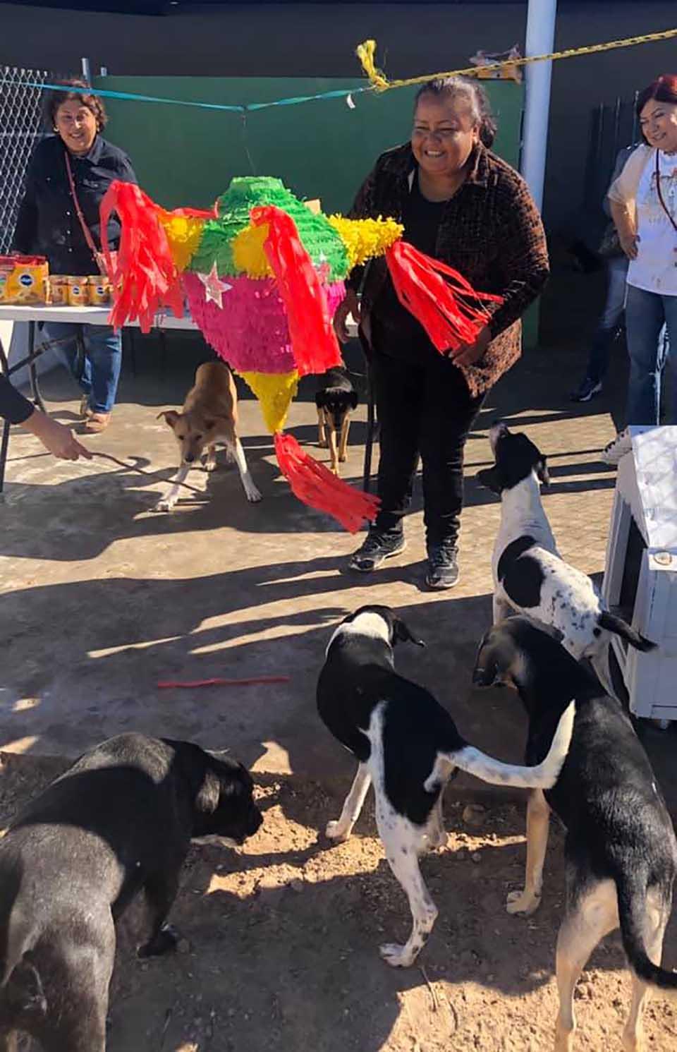 Perritos listos para la piñata