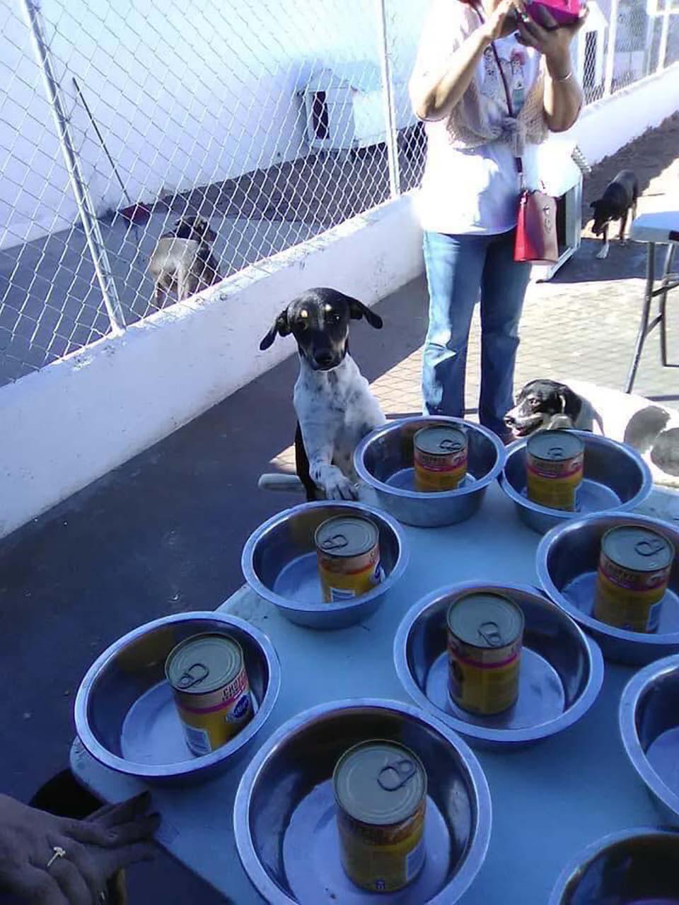 Perritos miran las latas de comida