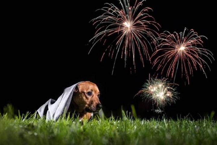 Perro asustado por fuegos artificiales