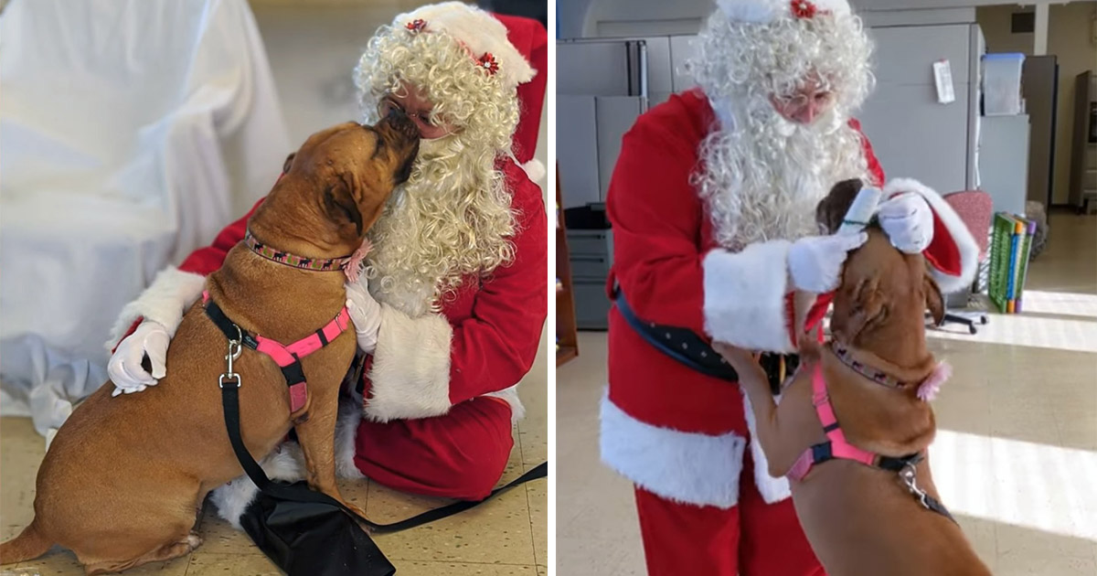 Perro que lleva más de 900 dias en el refugio pide a Santa ser adoptado