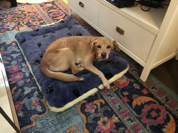 Perro sin hogar entra a una casa