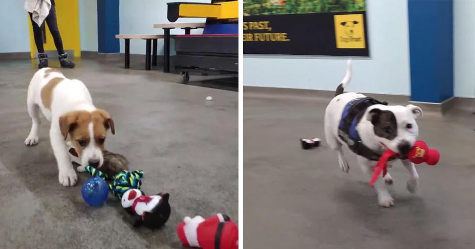 Perros del refugio eligen su propio regalo de Navidad