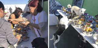 Rescatistas realizaron un festejo navideño para los perritos sin hogar
