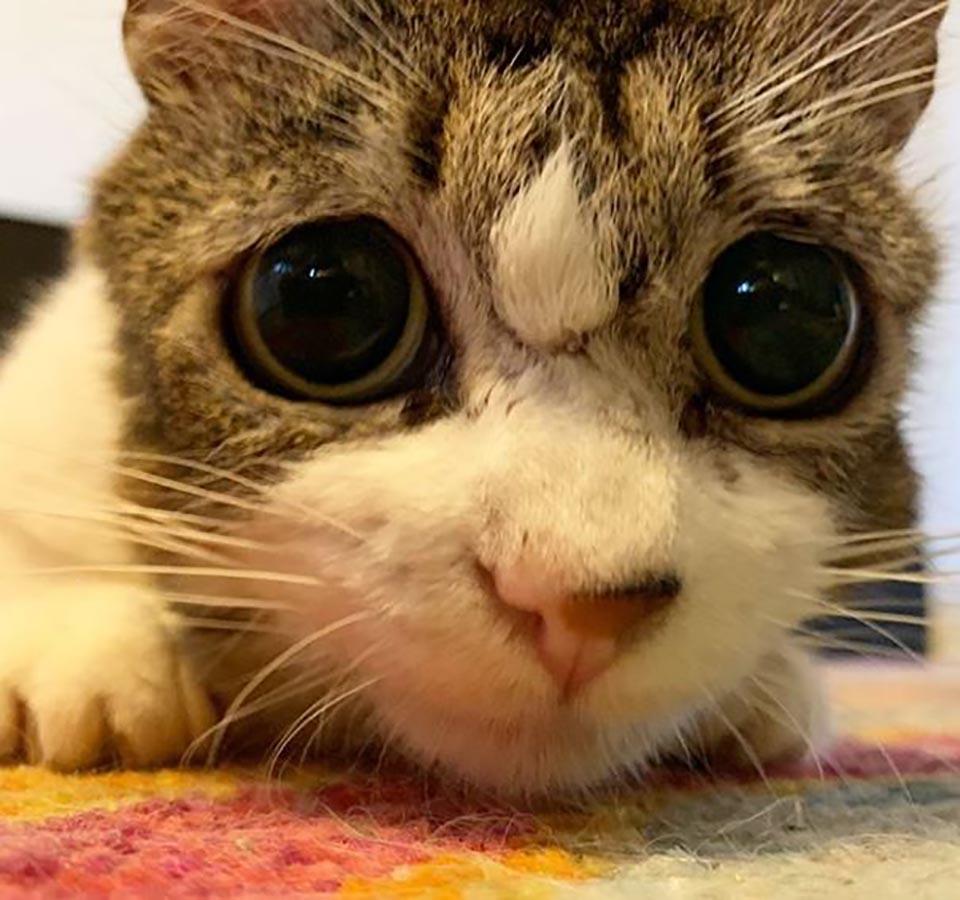 Rostro de gatita con ojos tristes