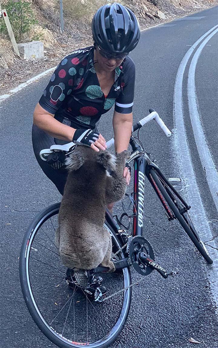 ciclista acaricia a koala