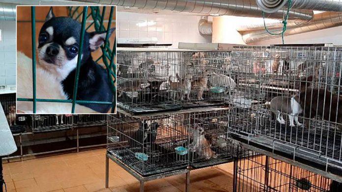 270 perros son rescatados de criaderos ilegales en España