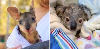 Artesanos y tejedores del mundo ayudan a los animales de Australia