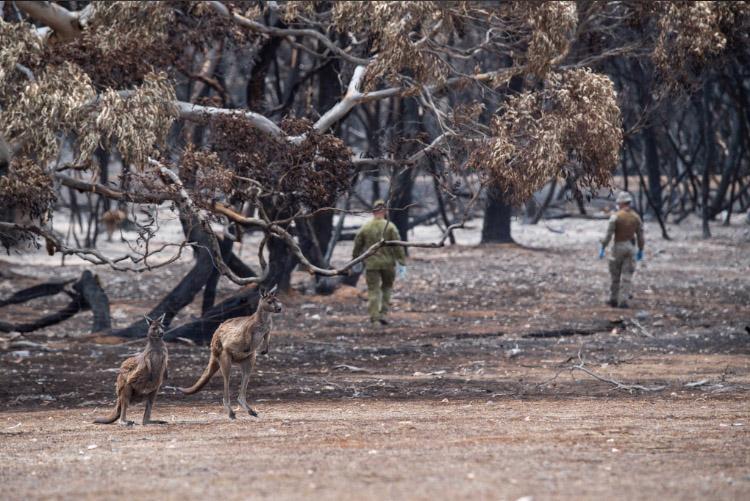 Bosques quemados isla canguro