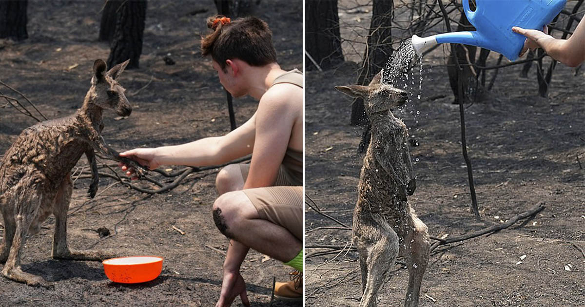 Canguro pide ayuda a un niño después de lograr salir de los incendios