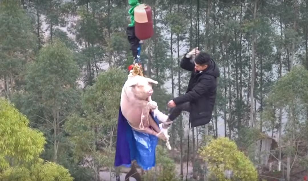 Cerdo obligado a Puenting