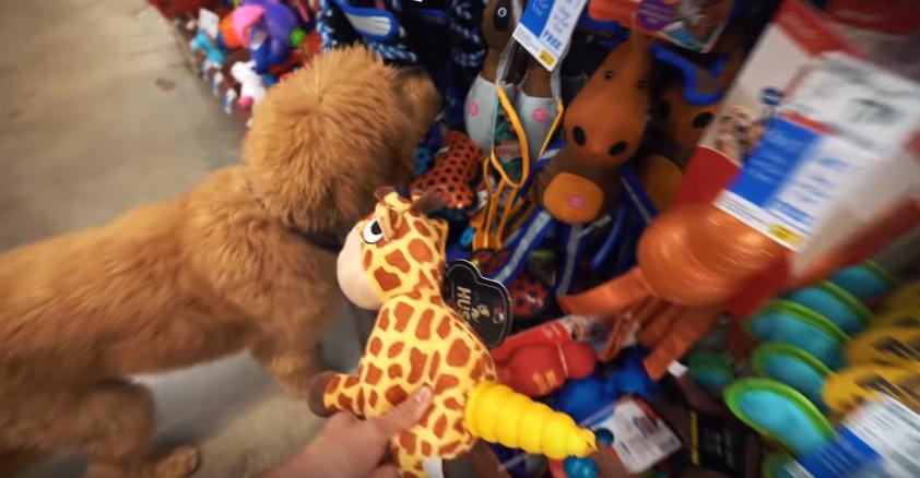 Dood en tienda de mascotas