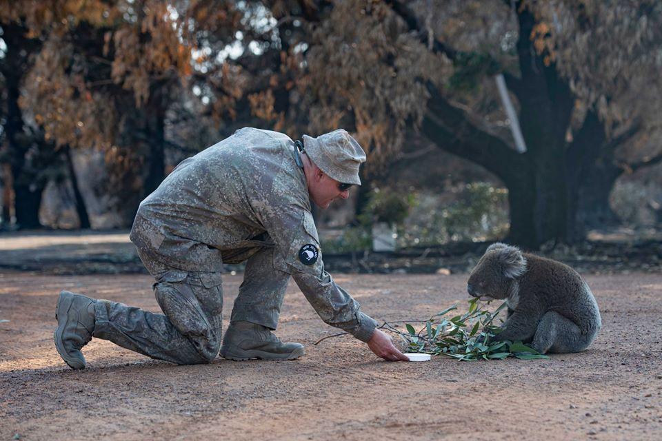 Ejercito rescata koala