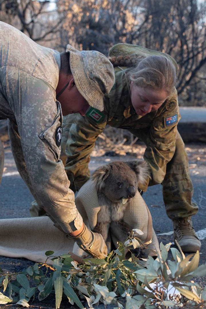 Ejercito rescata koala perdido