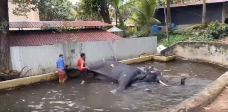 Elefante torturado azotado