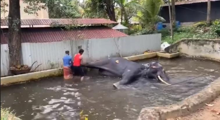 Elefante torturado y azotado
