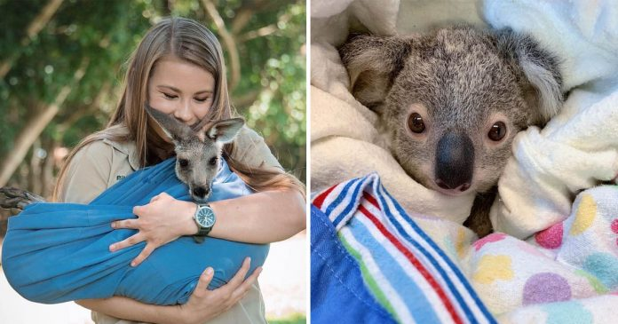 Familia de Steve Irwin esta salvando a animales de los incendios
