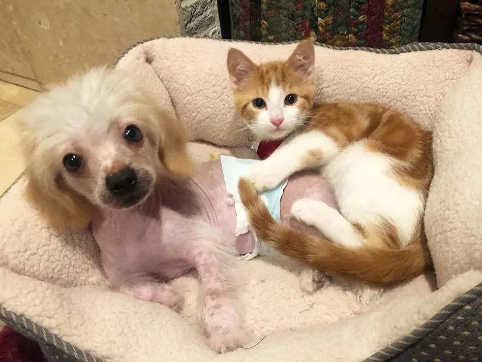 Gato callejero y cachorro