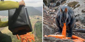 Helicópteros arrojan toneladas de alimentos para animales afectados por incendios