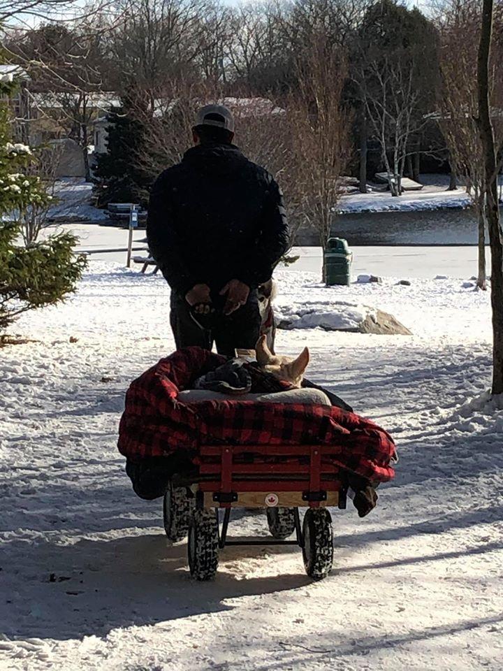 Hombre con su mascota en el parque