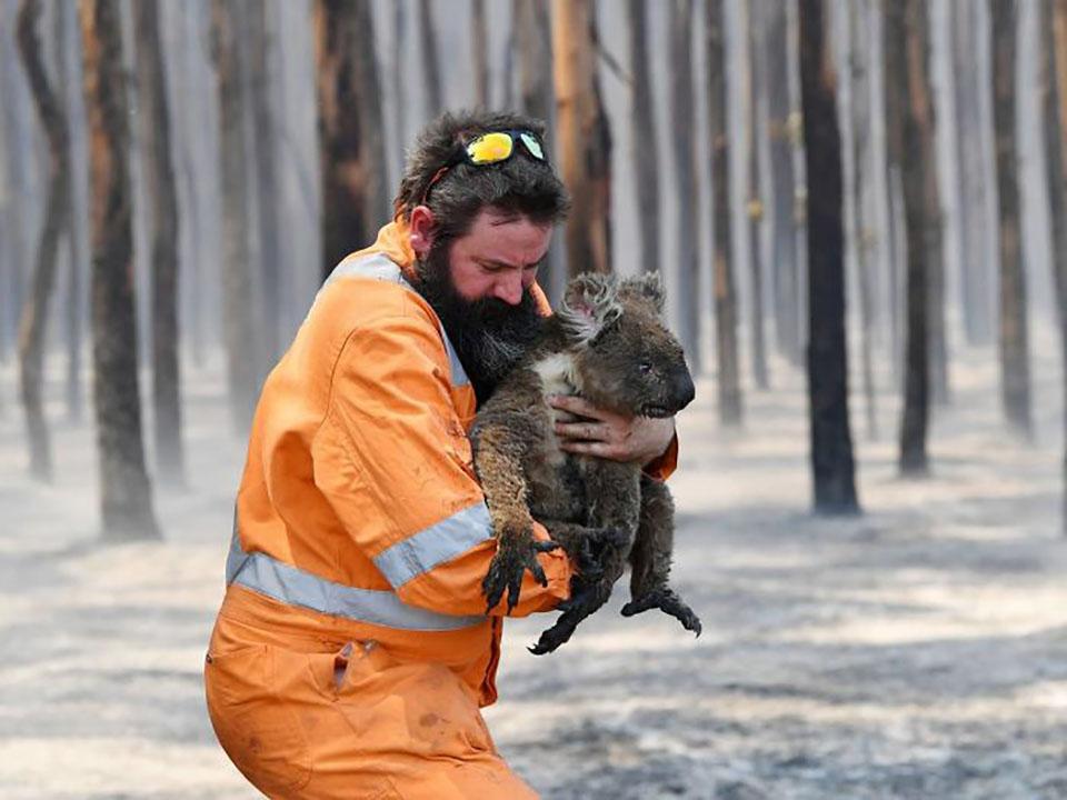 Hombre rescata a Koala