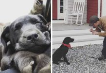 Hombre sordo adopta a un perrito sordo y le enseña el lenguaje de signos