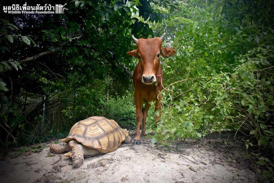 Inusuales amigos