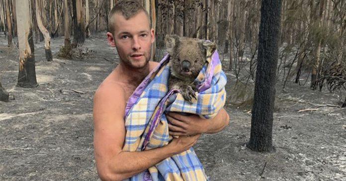 Joven cazador arriesga su vida para salvar los koalas