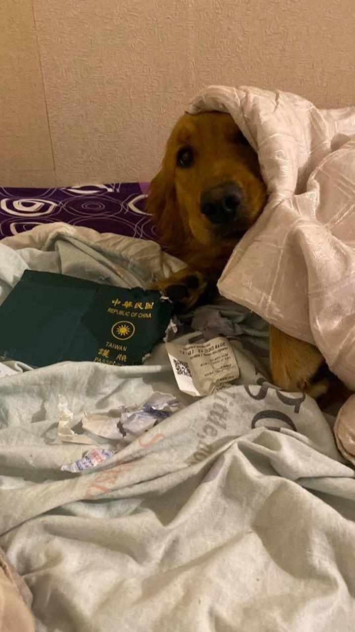 Perro Kim y pasaporte