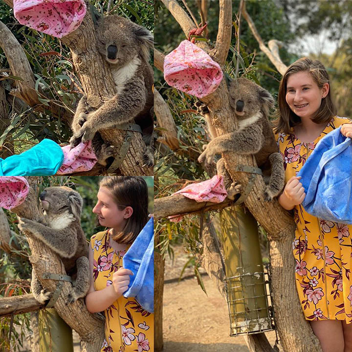 Koala en árbol con mantas