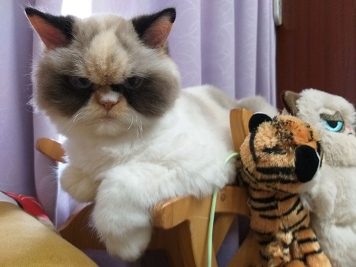 Meow Meow Gruñón