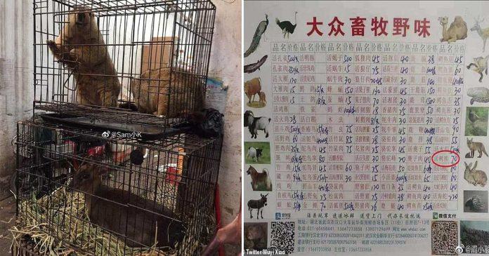 Mercado chino vendía koalas y otros animales vivos para consumo