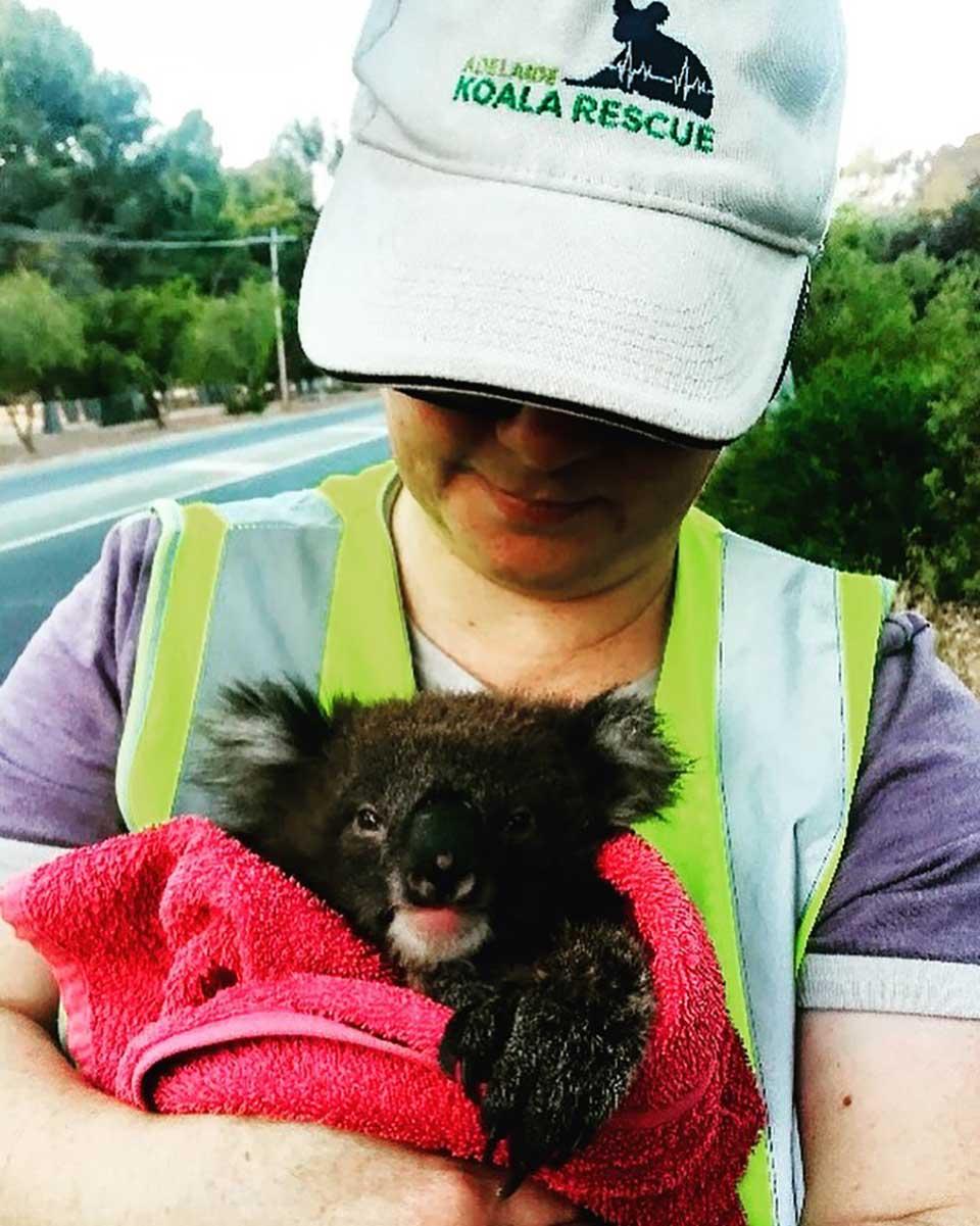 Mujer protege a pequeño koala