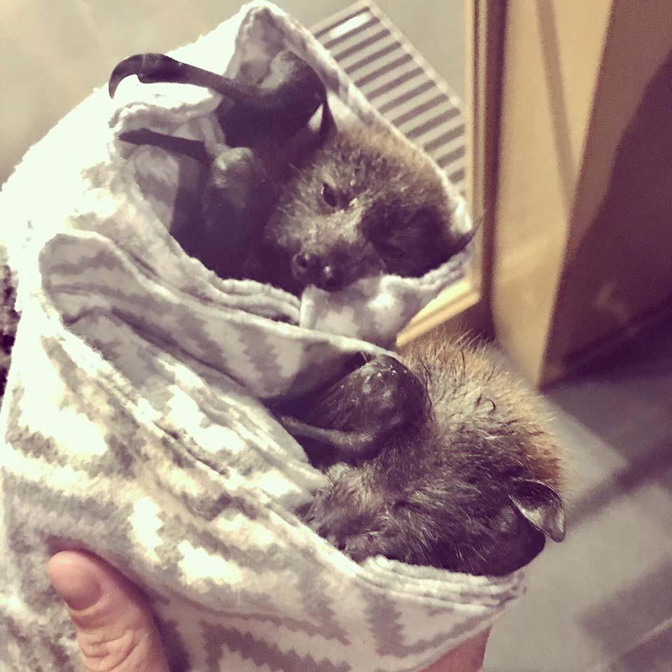 Murciélagos rescatados