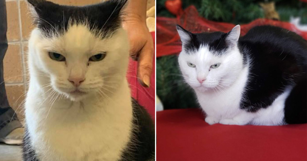 Perdita, el peor gato gruñón del mundo, busca un hogar para siempre.jpg1