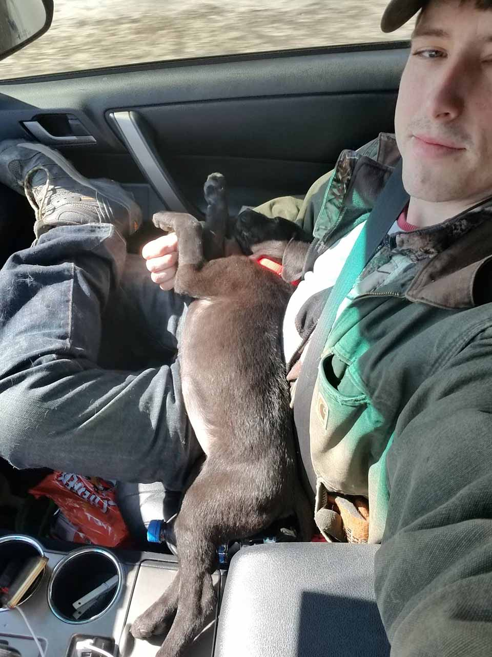 Perrito en auto acompañado de su adoptante