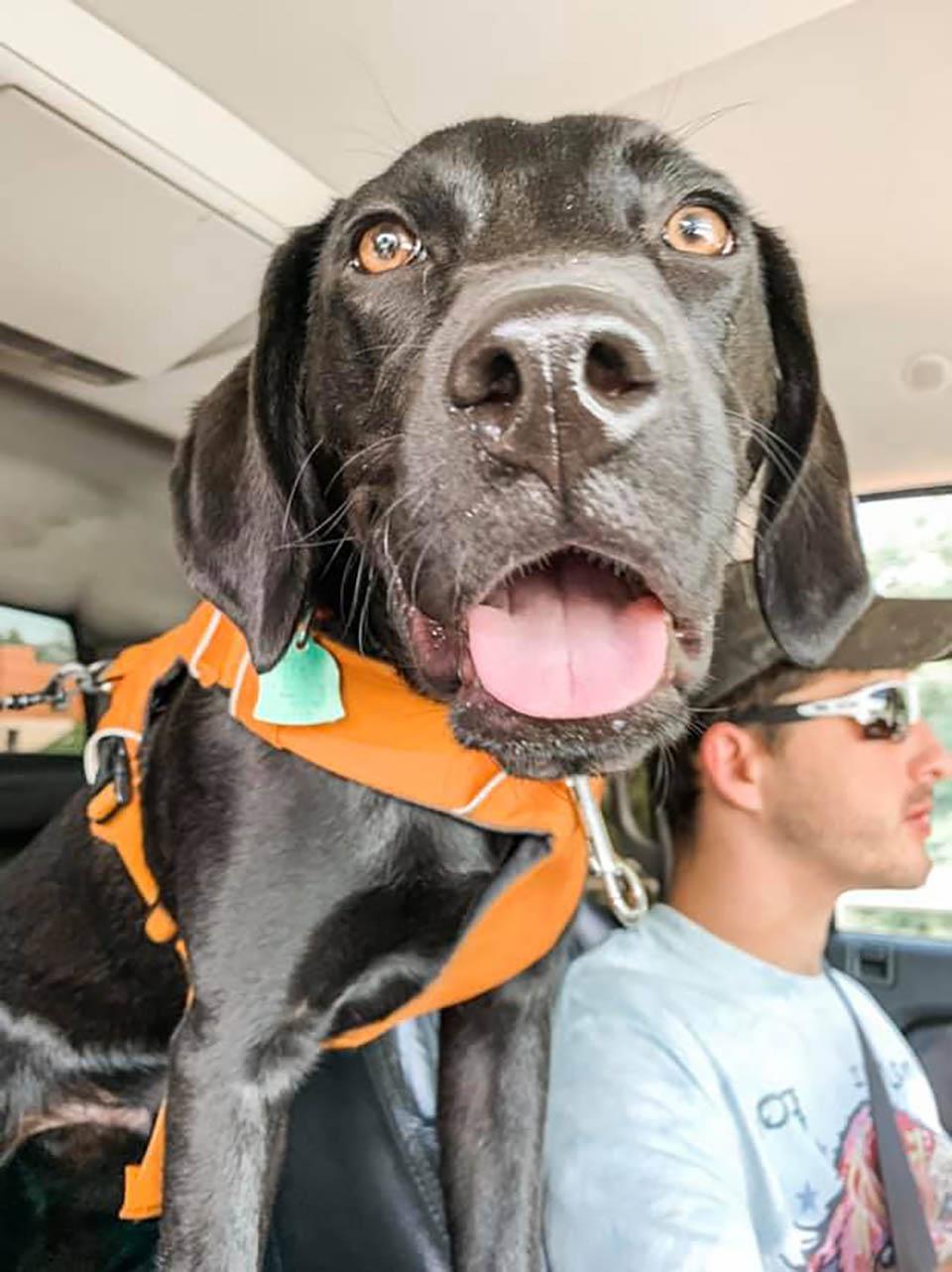 Perrito sordo en el auto