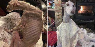 Perro abandonado al borde la muerte, hace una recuperación milagrosa