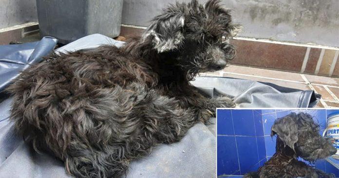 Perro abandonado, arrojado a una alcantarilla con pegamento en los ojos