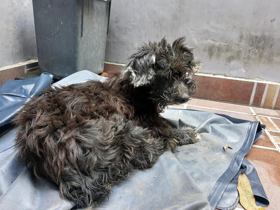 Perro abandonado en alcantarilla
