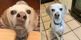 Perro con nariz torcida encuentra un hogar para siempre
