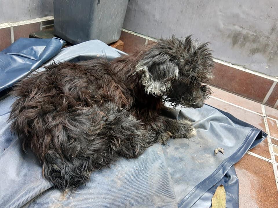 Perro después de bañado