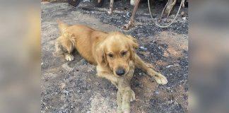 Perro encuentra su juguete favorito cuando regresa a su casa incendiada