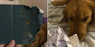 Perro evitó que su dueño fuera a Wuhan destruyendo su pasaporte
