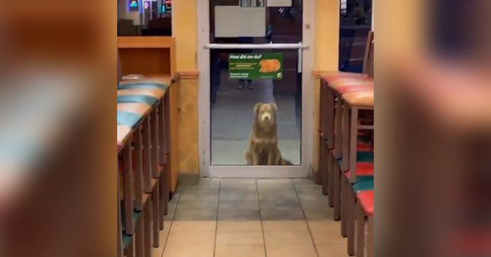 Perro sin hogar recibe sándwiches cada noche