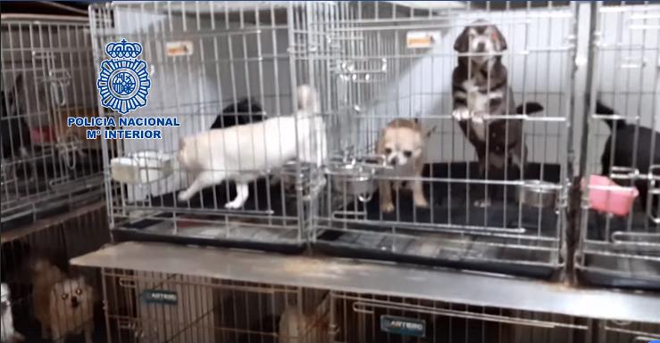 Perros en criaderos ilegales