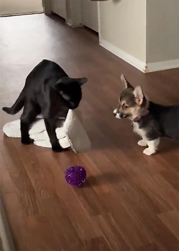 Gato Renly y su manta