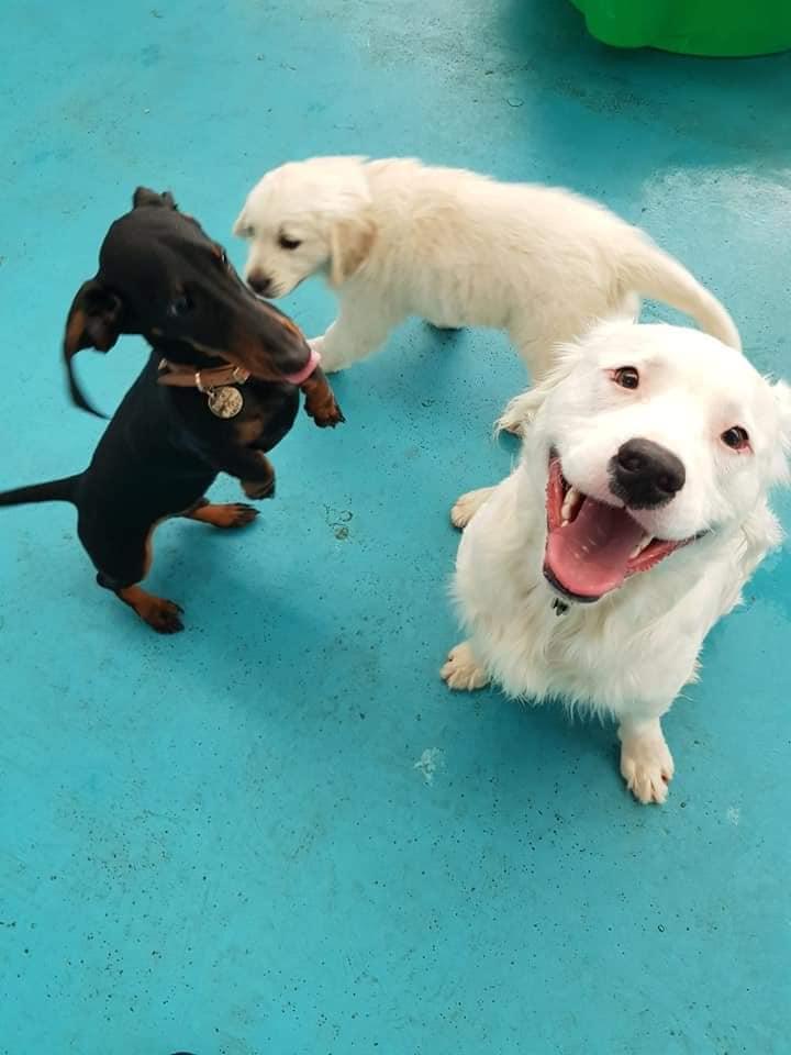 Shiro con sus amigos